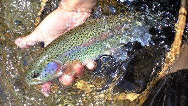 【初心者向け】驚くほど簡単に釣りが上達する方法