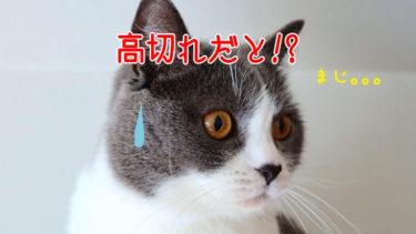 【初心者向け】キャストで高切れ(涙)高切れを防ぐ簡単な方法とは!?